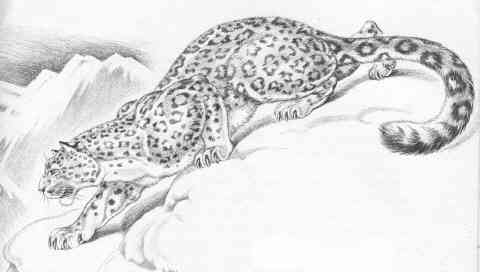 drawing of leopard from JUNGLE ANIMALS (1945)