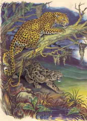 painting of leopards from JUNGLE ANIMALS (1945)